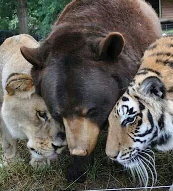 Lions, tigers and bears ;)