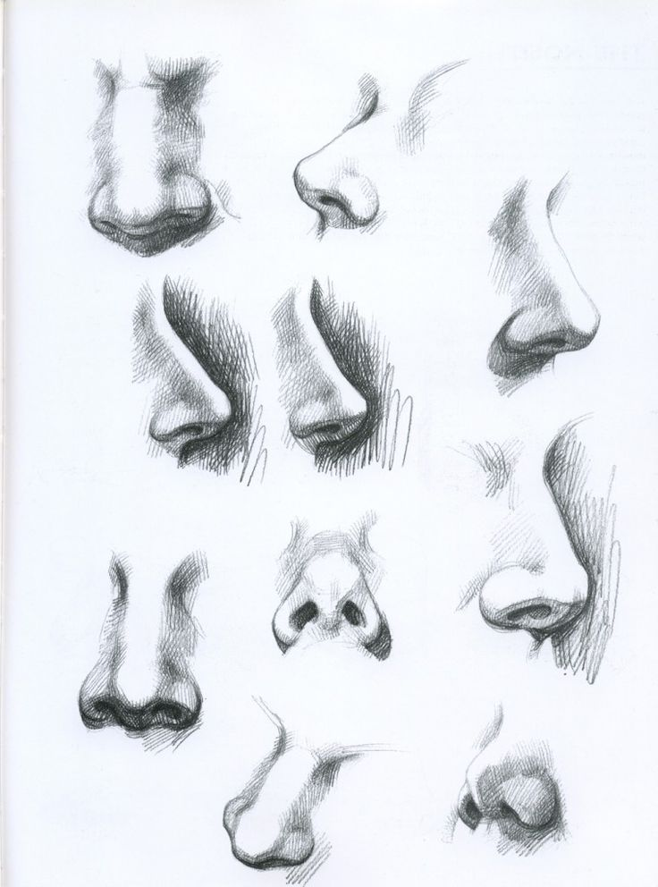 a study of the nose Glossary of terms relating to ear, nose, and throat disorders for patients and  consumers  audiology - the study of hearing and hearing disorders auditory.
