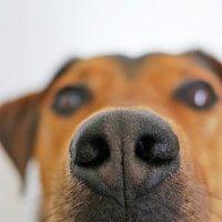 #dogalize Las razas de perros de caza mas conocidas #dogs #cats #pets