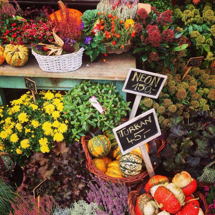 Love autumn colors...