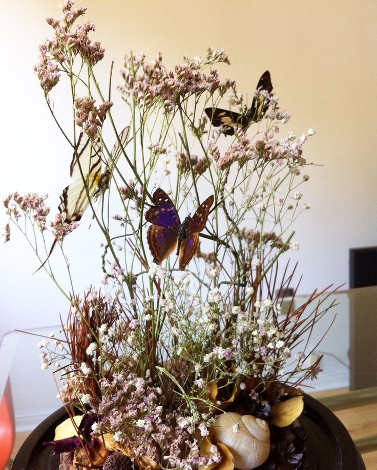 detalle fanal mariposas, Cristian Pizarro