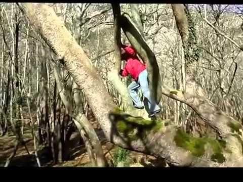 climbing trees Πως σκαρφαλώνουμε στα δένδρα