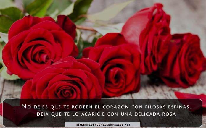 Imágenes de amor con rosas rojas