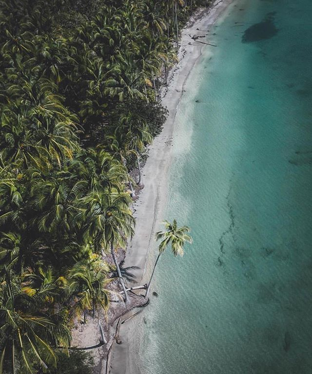 Dont be afraid to stand out.  A lone palm hangs over crystal clear water  @deniscebulec at Corcovado National Park! #costaricaexperts #costarica #corcovado
