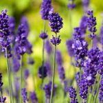 Rozmarýnka je právem považována za jednu z nejpůvabnějších bylinek. Také její povzbudivá, osvěžující vůně s nádechem pryskyřic je velmi podmanivá. Lze ji snadno pěstovat v přenosných nádobách, je krásná i užitečná. Do pokoje, na balkón, na zahradu i do kuchyně vnese atmosféru slunného středomoří.