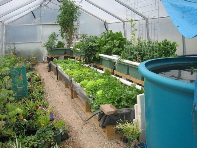 "aquaponics  | The greenhouse aquaponics system has now been ""in production"" for ..."