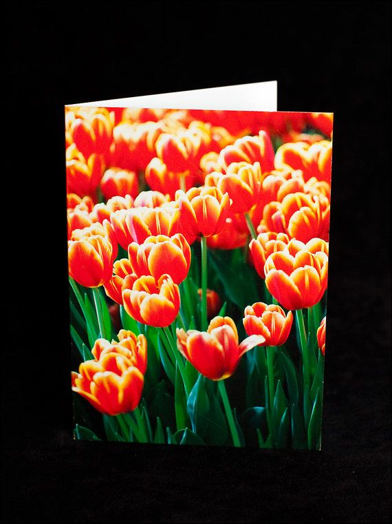 Greeting Card  bright red tulips  blank inside by ErinnaImagery, $4.50