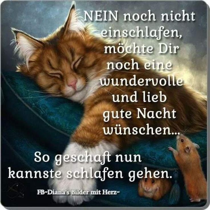 Guten Nacht Bis Morgen Früh Und Schlaft Schön Gute Nacht