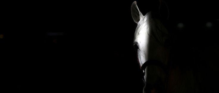 InfoNavWeb                       Informação, Notícias,Videos, Diversão, Games e Tecnologia.  : Aulas de equitação de filho de Cabral foram pagas ...