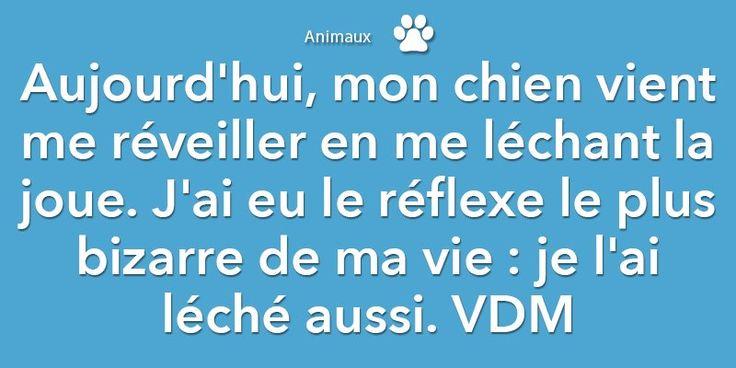 #JourneeMondialeDuChien