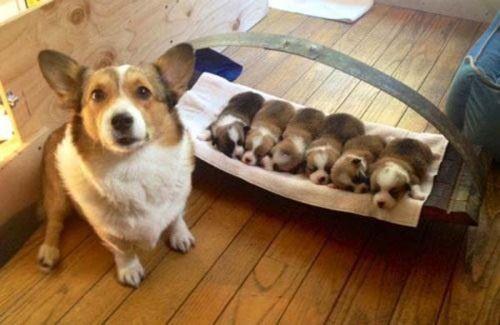 Sevimli Anne Köpek ve Yavruları (37) Cute Mom Dog And Puppies #anne #kopek #yavru #mom #dog #puppies #pup #cute #baby #dogs -------via----- @dkupnet - - dkup.net