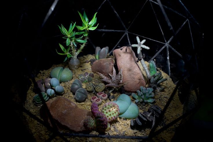 Rare plant terrarium by Angles & Earth.