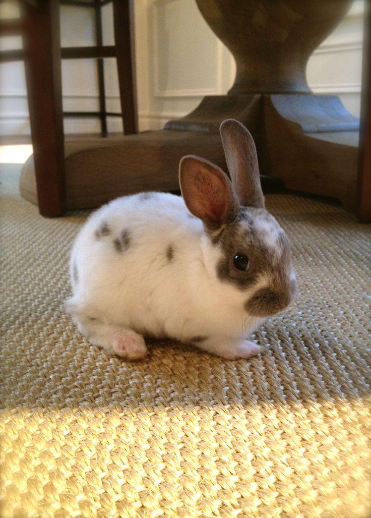 Baby Mini-Rex | Happy Dance Ranch (Bunnies) | Pinterest