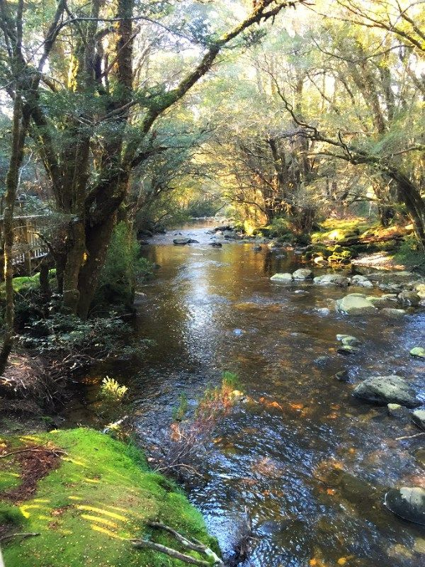 Enchanted Walk, Cradle Mountain National Park ~ article and photo for…