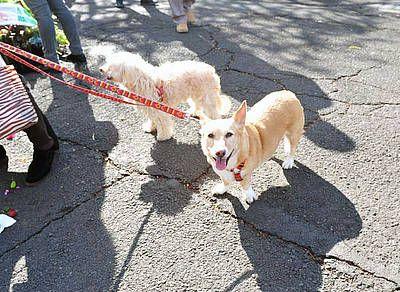 Hunde in Spanien, Foto: Tobias Büscher