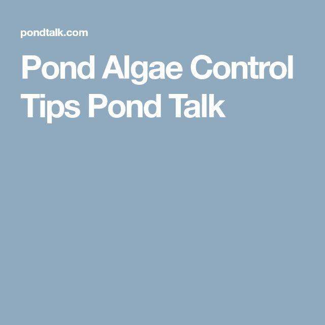 Pond Algae Control Tips Pond Talk