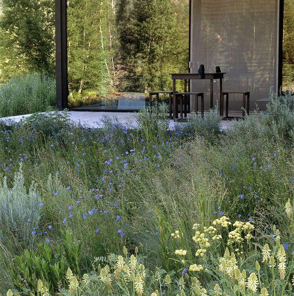 3804 best grasses images on pinterest landscaping landscape meadow simple pavillion by lutsko associates landscape architecture workwithnaturefo