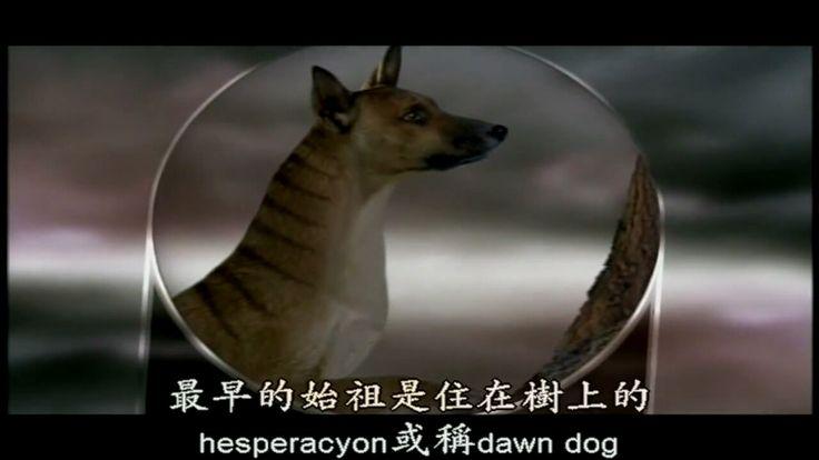Prehistoric thylacine