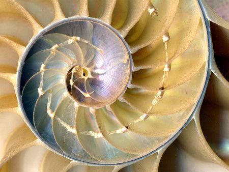 Nautilus shellFractals Inspiration, Sea Inspiration, Fractals Beautiful, Google Search, Nature Pattern, Beach, Nautilus Shells, Incr Valuable, Seashells Texture