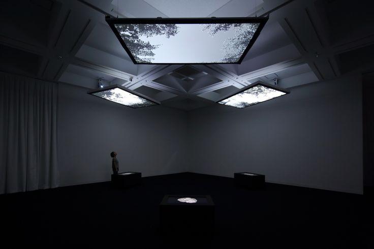 Youki Hirakawa - Vanished Forest / 2014. Video Installation / 3 projections and 3 Monitors / Silent / 10min Loop. Sapporo Art Museum. Photo: Kioku Keizo