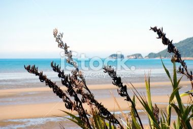 New Zealand Flax and Seascape Royalty Free Stock Photo