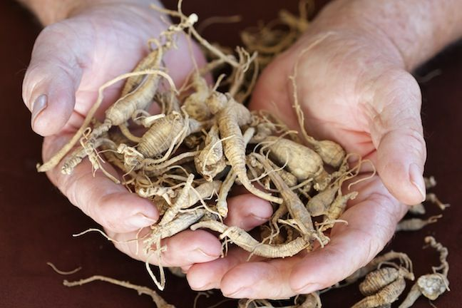 You can earn money by growing ginseng in your very own ginseng farm. Originally published as