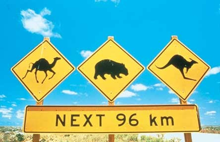 In Australia, you'll need to watch out for some very unusual road companions. They are often unpredictable. A driver needs to be doubly vigilant especially around dawn and dusk as each one could badly damage your vehicle if theri is a collision.............Bang!!!!