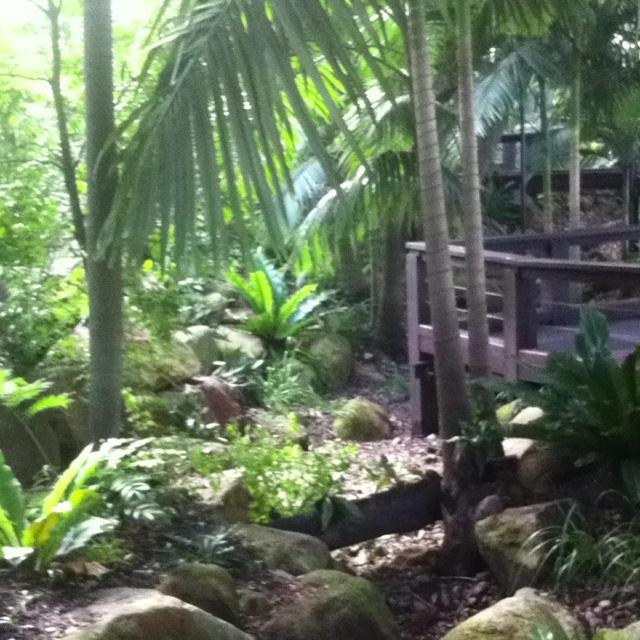Southbank rainforest.