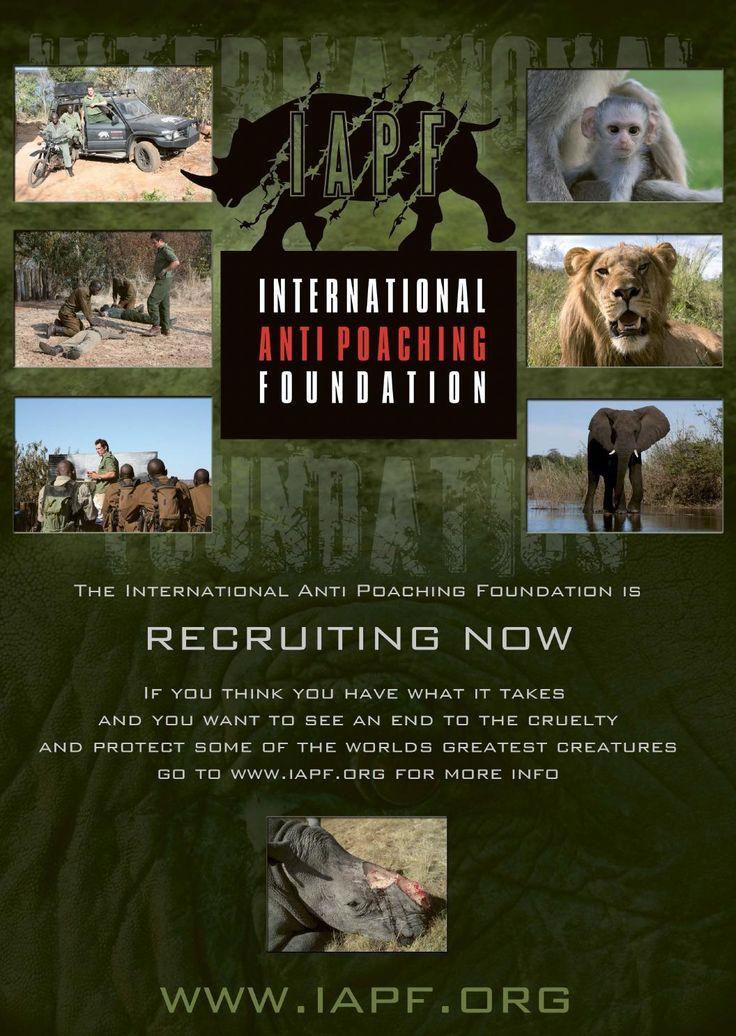 Former soldier saving rhino in Africa