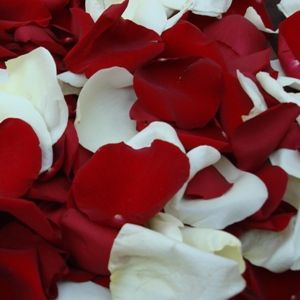 FiftyFlowers.com - Red and White Rose Petals - 6,000 Rose Petals for $139.99