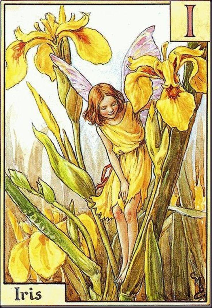 """Iris""  художник: Сесиль Мэри Баркер, арт, фея, И́рис, или Каса́тик (лат. Íris), серия: Alphabet Fairies"