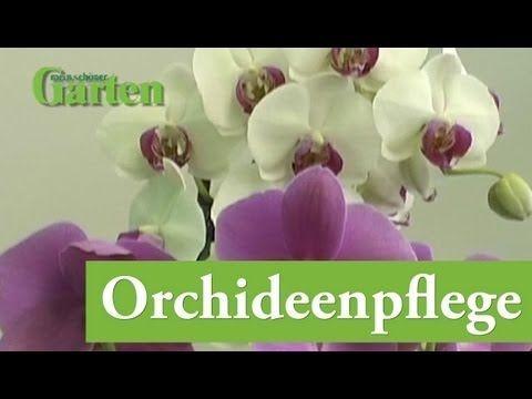 Zimmer-Orchideen pflegen