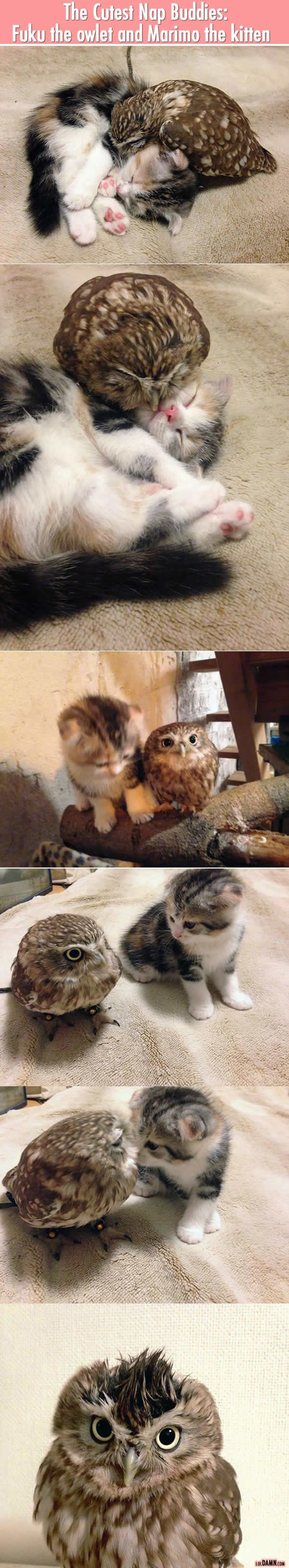 best animals images on pinterest fluffy pets adorable animals