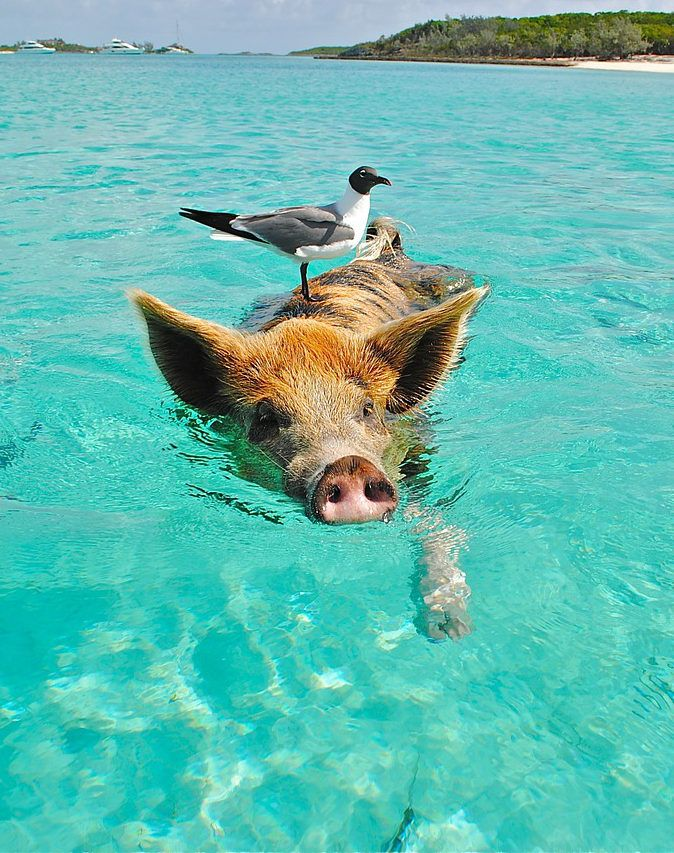 Oh! The creatures you'll see in paradise. This island is one of those bucket list...
