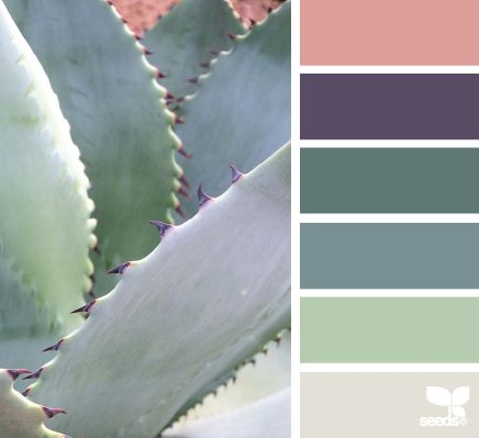 Succulent Hues - http://design-seeds.com/index.php/home/entry/succulent-hues13