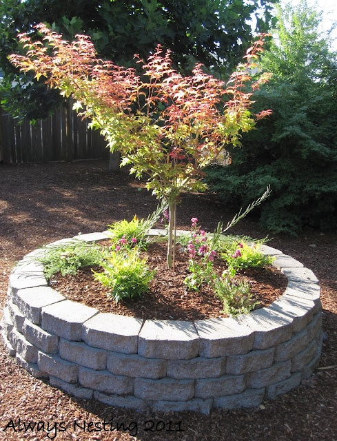 Good Trees For My Backyard : Pecans Trees, Gardens Ideas, Apples Trees, Good Ideas, Benches, Front