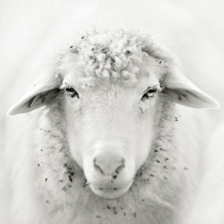 30 Silk Smooth Photographs « Stockvault.net Blog – Design and Photography