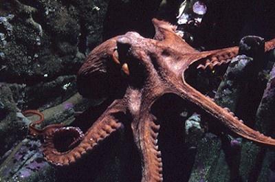 8 Unbelievable octopus videos