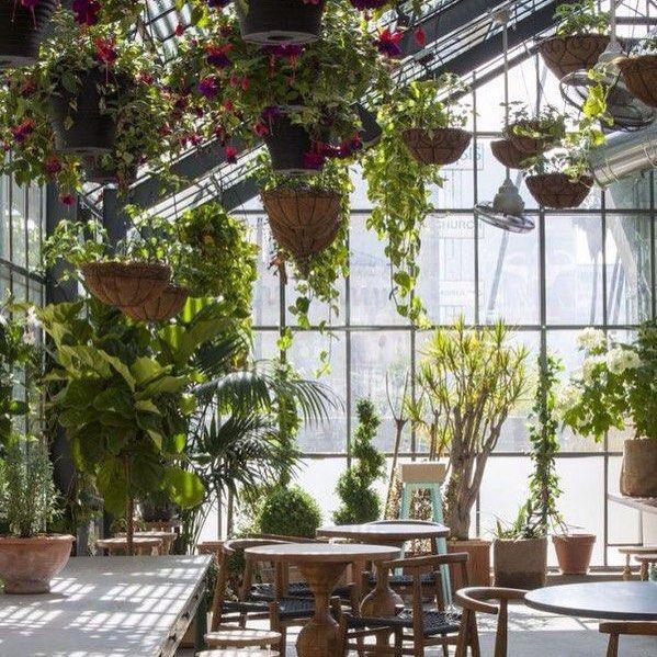 Солнечные лучи, пробивающиеся сквозь прозрачную крышу, растения на полу и в…