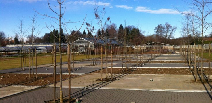 Copertura del suolo: influenza sulla fisiologia degli alberi