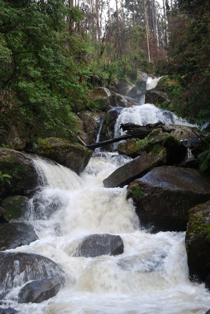 Kepler falls off Lady Talbot Drive and Marysville