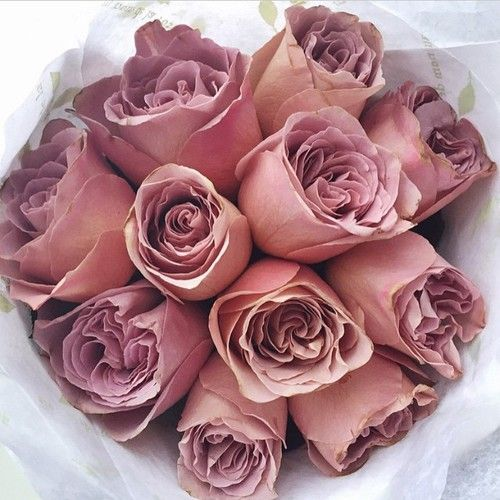 rose, beautiful, and pink image