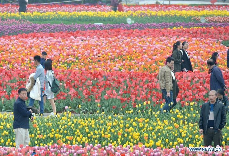 Tourists enjoy the tulip blossoms at Hunan Forest Botanical Garden in Changsha City of central China's Hunan Province, March 11, 2017.