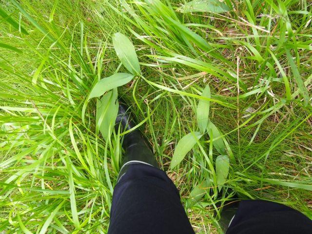 Kahvakuula kainalossa: Virkistäytymässä metsälenkillä