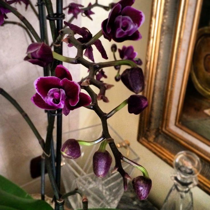 Orchidee viola, per un home decor delizioso e naturale. Perché i fiori rendono ogni casa magica