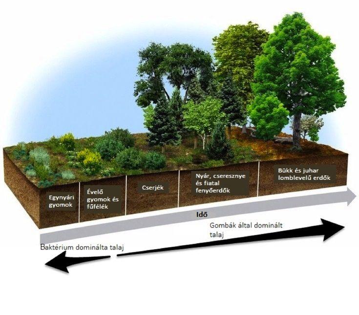 Útmutató mély és gazdag talaj létrehozásához, a természet utánzásával