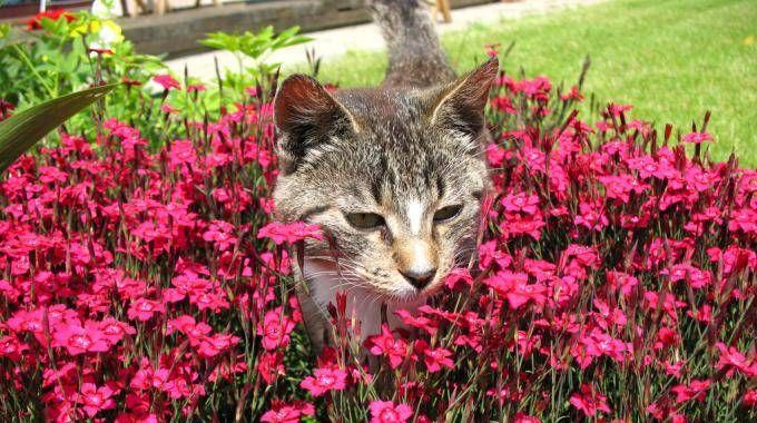 Comment faire fuir les chats de votre jardin jardin repulsif chat jardin jardins - Repulsif chat jardin naturel ...