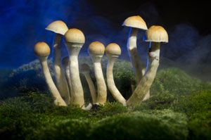 Magic Mushrooms Can Bring About Lasting Personality Changes