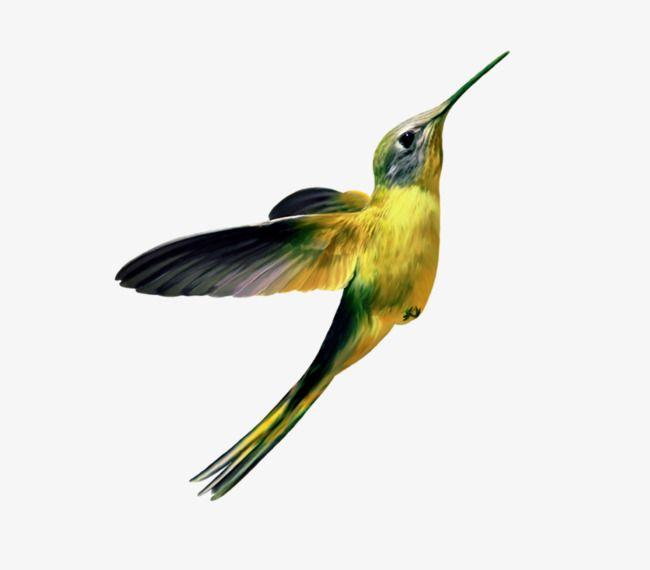 Humming Bird Wall Art A4 Canvas Print Bird Wildlife