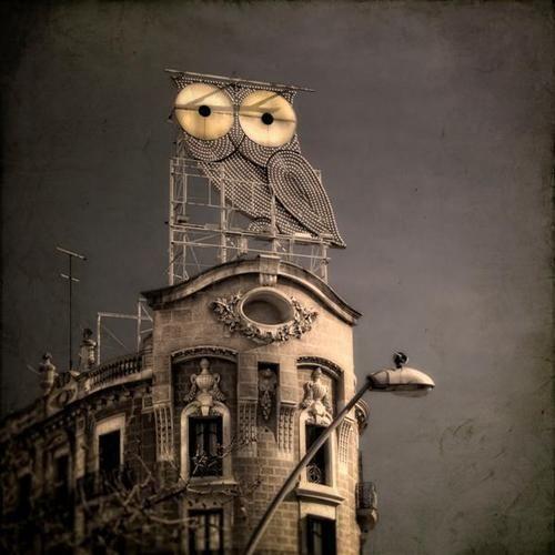 Owl building.